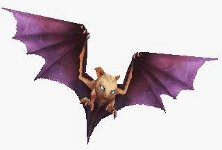 monster_seekerbat_ff9.jpg