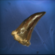 item_ancientdragontooth4_ff15ane.png